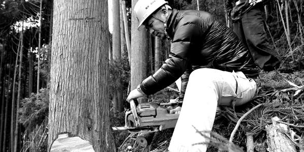山で木を切る